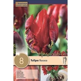 Tulip Rococo x8