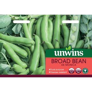 Broad Bean De Monica