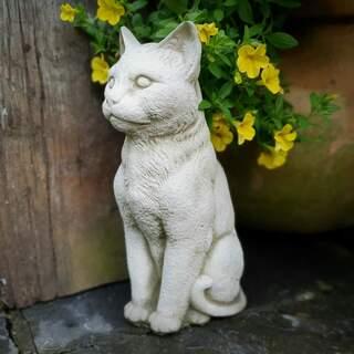 Cat Serene