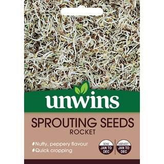Sprouting Seeds Rocket