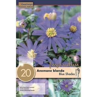 Anemone Bl Blue Shades