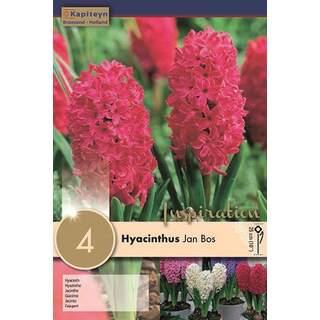 Hyacinth Jan Bos Bedd