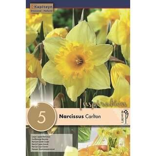 Narcissus Carlton x5