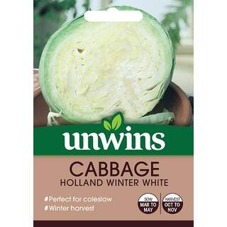 Cabbage Holland Winter White