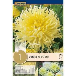 Dahlia Yellow Star