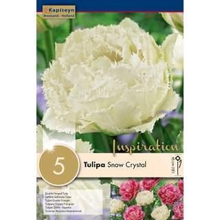 Tulip Snow Crystal x5