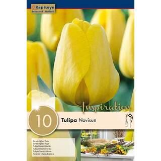 Tulip Novisun x10