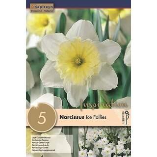 Narcissus Ice Folies x5