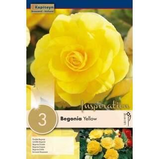 Begonia Yellow Double