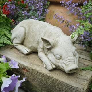 Sleeping Pig B