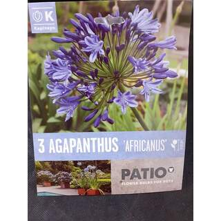 Patio Coll. Agapanthus