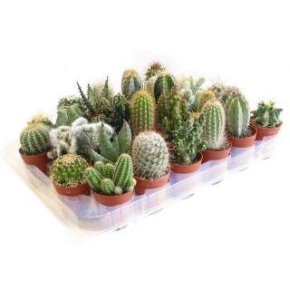 Cactus mix 101