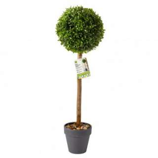Uno Topiary Tree 40cm