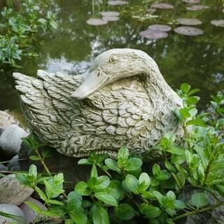 Duck Resting