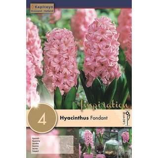 Hyacinth fondant x4