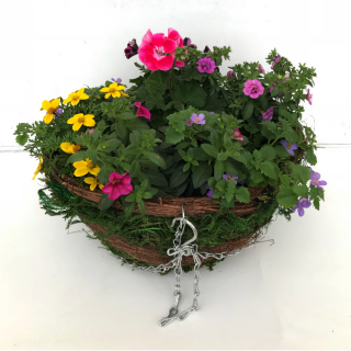 Basket Plants10.5cm