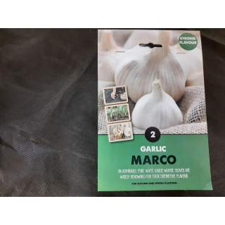 Garlic Bulbs Marco