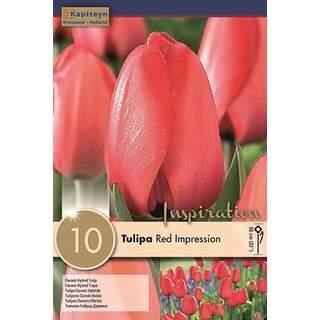 Tulip Red impression x10